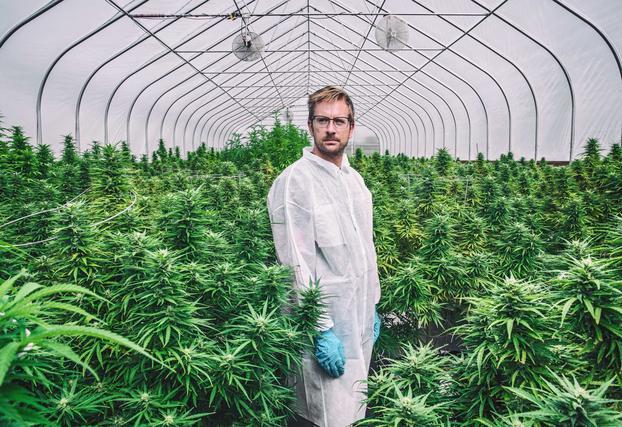 Как называют марихуану где собрать дикая конопля